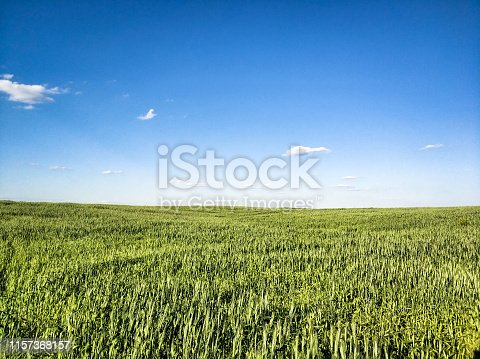 istock Agricultural scene with green wheat field and blue sky 1157368157