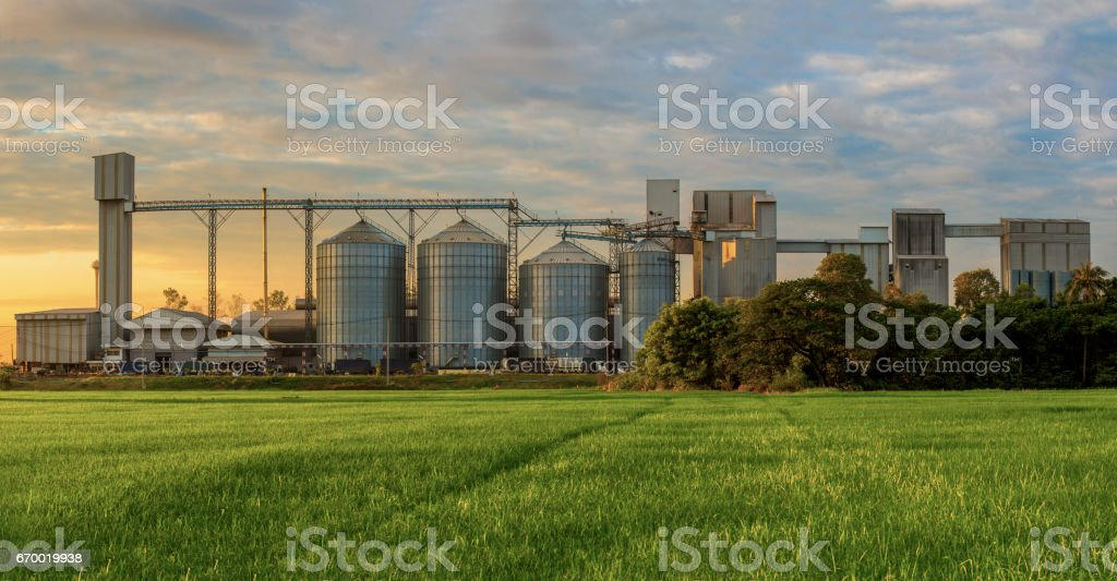 Agricultural Silos - Building Exterior, Storage and drying of grains, wheat, corn, soy, sunflower against the blue sky with rice fields. stock photo