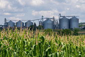 Silo in a corn field. Agricultural Silos. Storage and drying of grains.