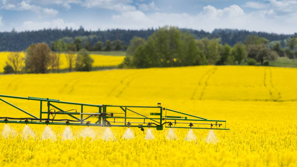 Agricultural sprayer detail. Flowering rapeseed field. Brassica napus stock photo