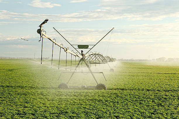 Agricultural sprinkler in a farm field stock photo