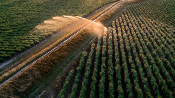 Agricultural sprinkler - irrigation area, aerial view Agricultural sprinkler - irrigation area, aerial view - back lit agricultural cooperative stock pictures, royalty-free photos & images