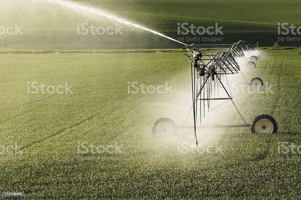 Agricultural Sprinkler Irrigation Crop Spray royalty-free stock photo