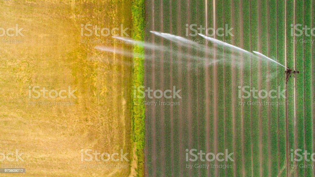 Landwirtschaftlichen Sprinkler, Weizenfeld – Foto