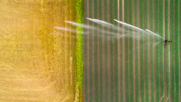 Agricultural sprinkler, wheat field Artificial watering, wheat field - agricultural area, aerial view irrigation equipment stock pictures, royalty-free photos & images