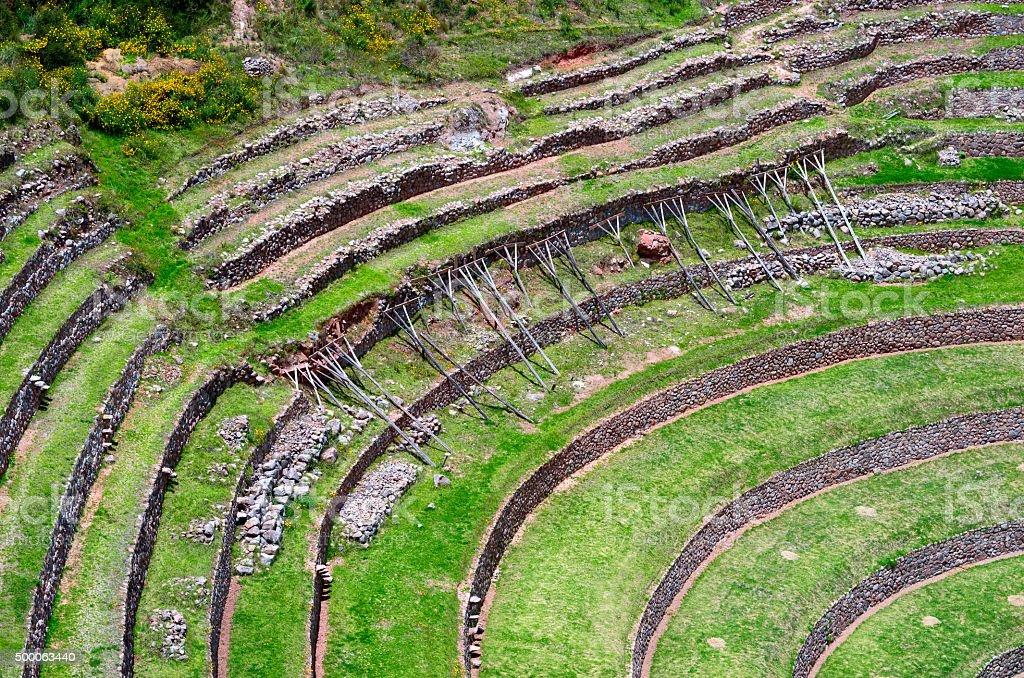 Agricultura Terrazas En Morena Perú Cuzco Foto De Stock Y