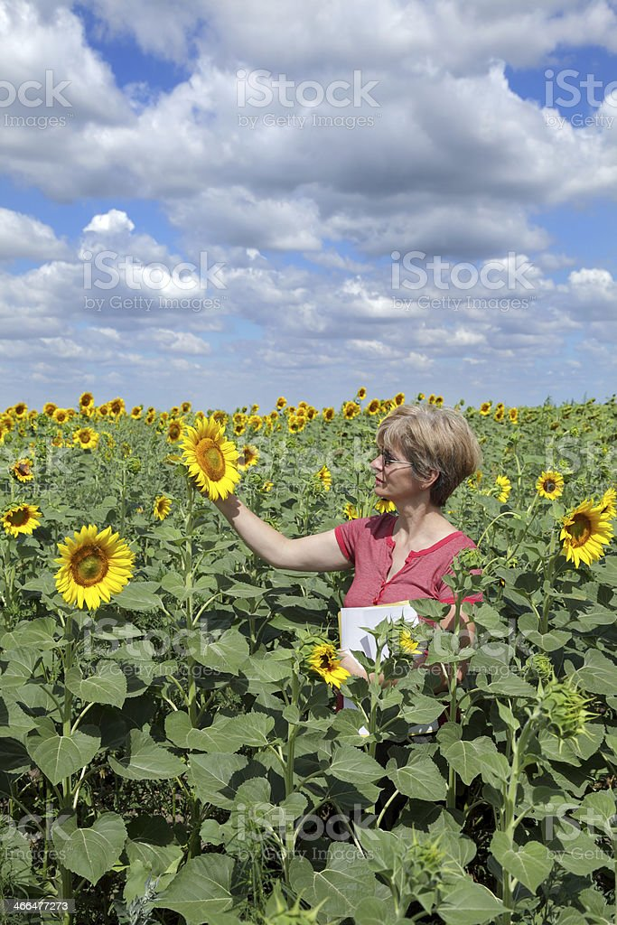 Agriculture, agronomy royalty-free stock photo