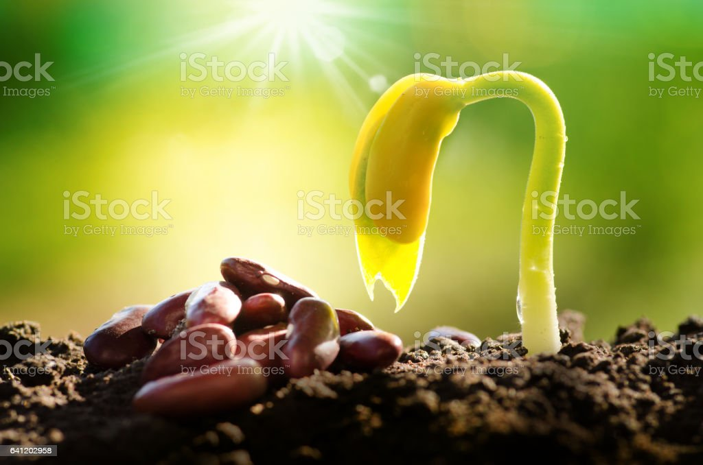Agriculture and New life starting concept stock photo