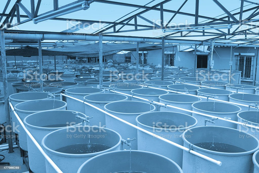 Agriculture aquaculture farm royalty-free stock photo
