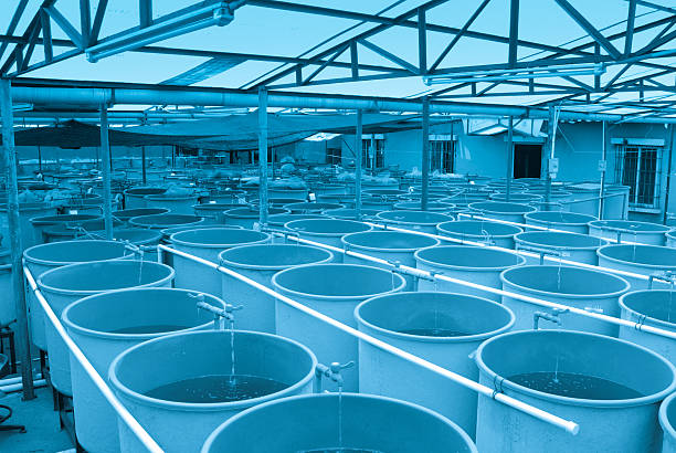 agriculture aquaculture farm - aquaculture stock pictures, royalty-free photos & images