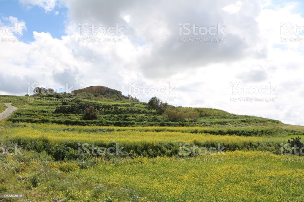 Agriculture at Gozo Island of Malta at Mediterranean Sea - Royalty-free Agave Stock Photo