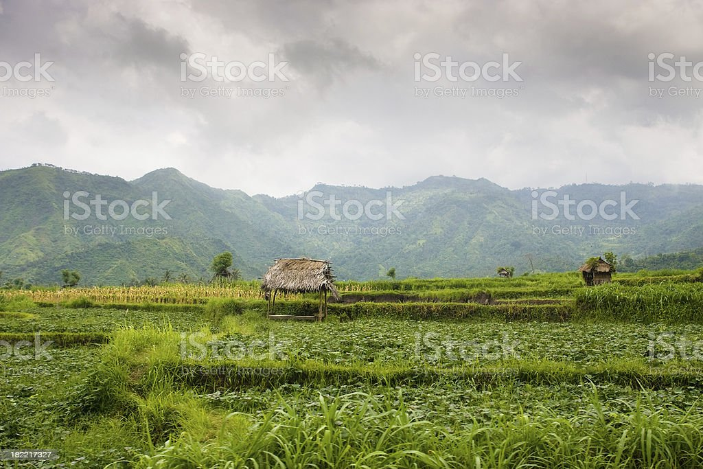 Agriculture Bali Indonesia Rice Terraces royalty-free stock photo