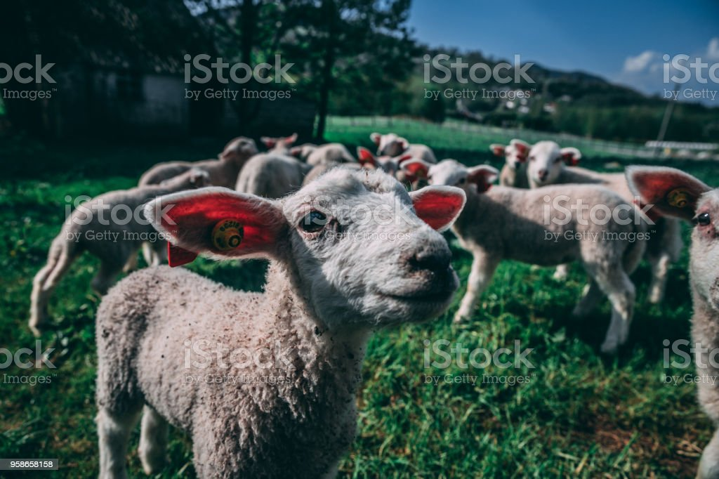 Agriculture Bondelandet stock photo