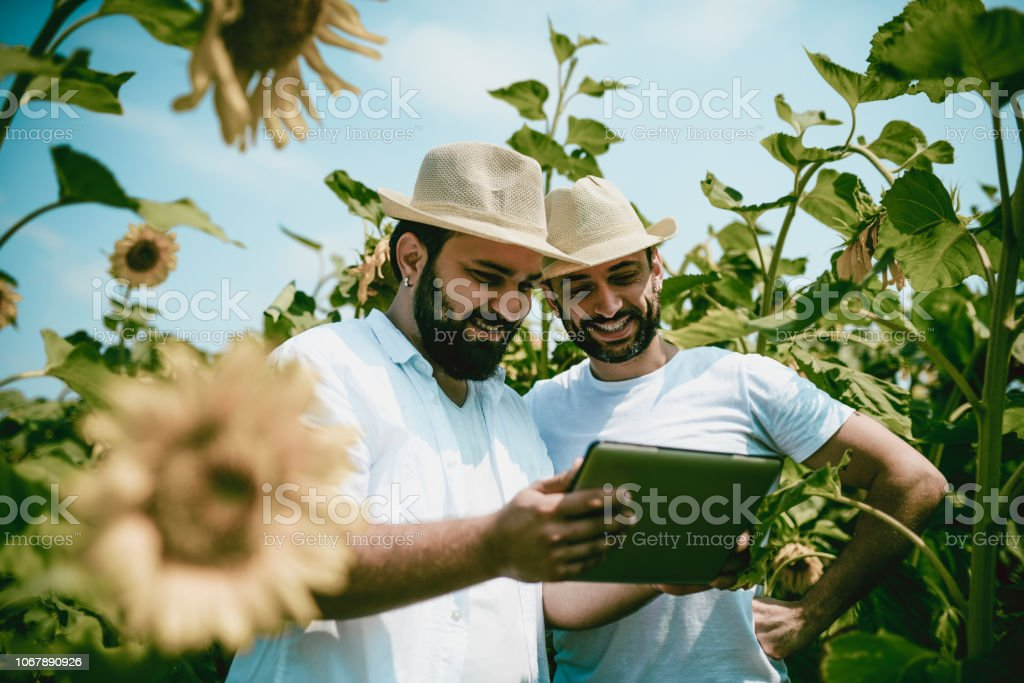 Agriculture Colleagues Watching Videos About Sunflowers stock photo