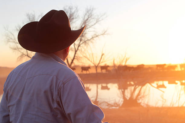 Agriculture: Cowboy Farmer Rancher with Cattle at Sunset and pond stock photo
