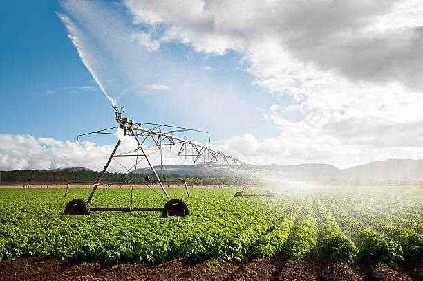 agriculture: crop irrigation - agriculture stock pictures, royalty-free photos & images