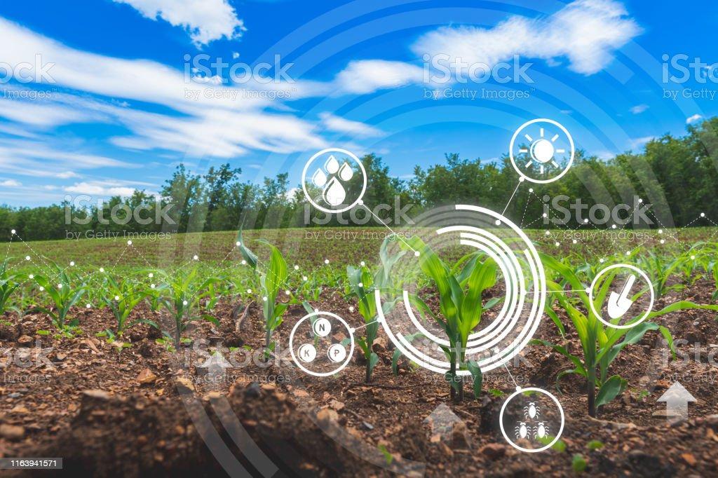 農業數位農業玉米田技術概念與種植地玉米種植 - 免版稅創新圖庫照片