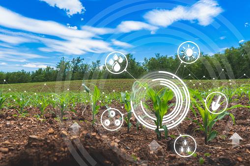 農業數位農業玉米田技術概念與種植地玉米種植 照片檔及更多 創新 照片