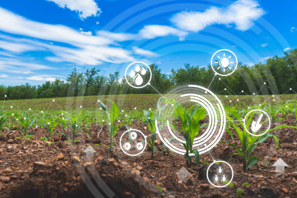 agriculture digital farm cornfield technology concepts with growing maize in the cultivated field - comida sustentavel imagens e fotografias de stock