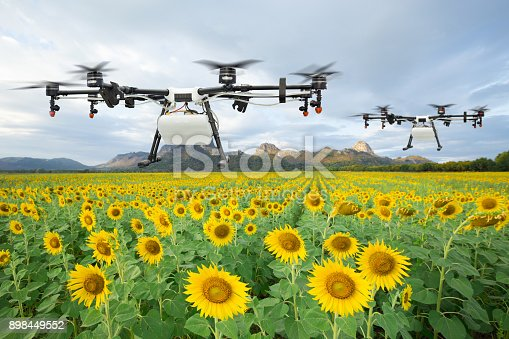 898449496 istock photo Agriculture drone flying on the sunflower field, Smart farm concept 898449552