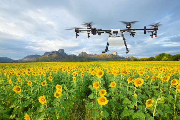 agriculture drone flying on the sunflower field, smart farm concept - drones stock photos and pictures