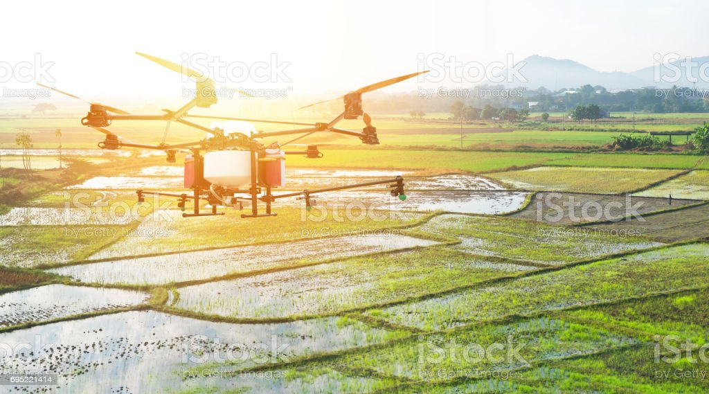 UAV , Agriculture drone technology , precision farming , surveying crops concept. Drone spray insecticide in filed rice with flare light effect. stock photo