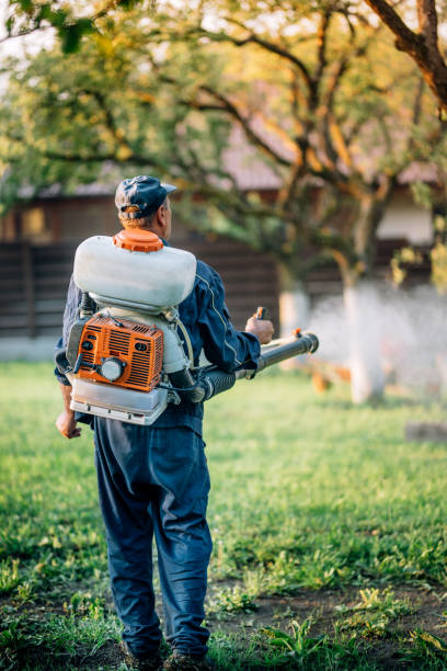 Agriculture farm worker spraying organic pesticides on fruit growing garden stock photo