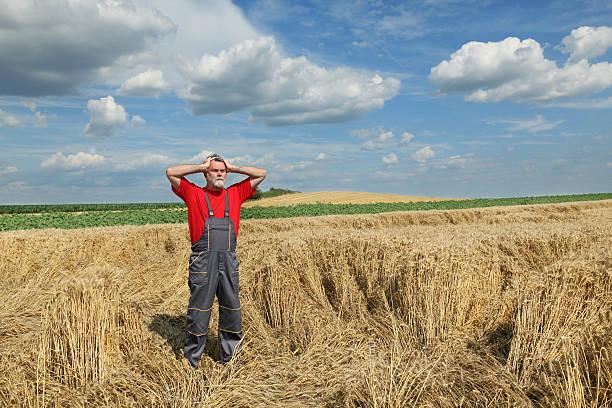 Landwirtschaft, farmer Geste in wheat field – Foto