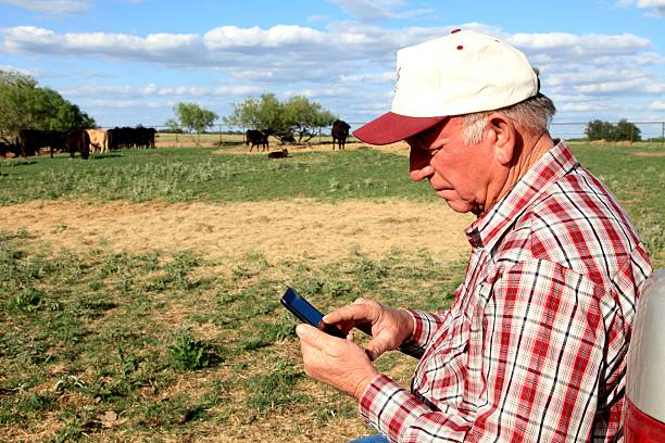 Agriculture: Farmer or rancher with Smart Phone and Cattle stock photo