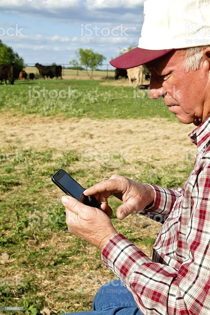 Agriculture: Farmer or rancher with Smart Phone, Cattle, field royalty-free stock photo