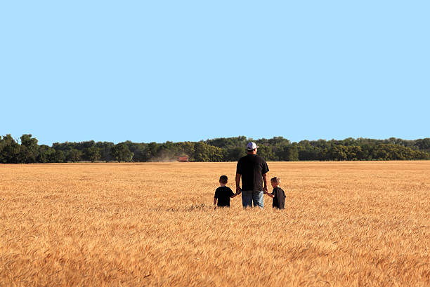 Agriculture: Father and Twin Sons in Wheat Field During Harvest stock photo