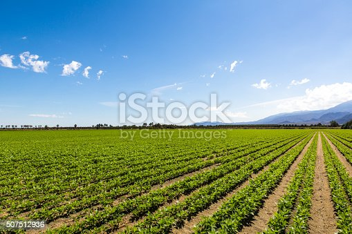 istock Agriculture Fertile Field of Organic Crops 507512936