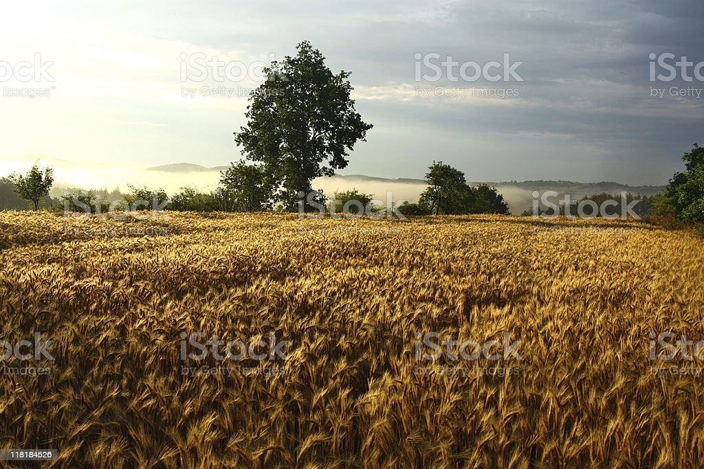 agriculture field during sunset royalty-free stock photo