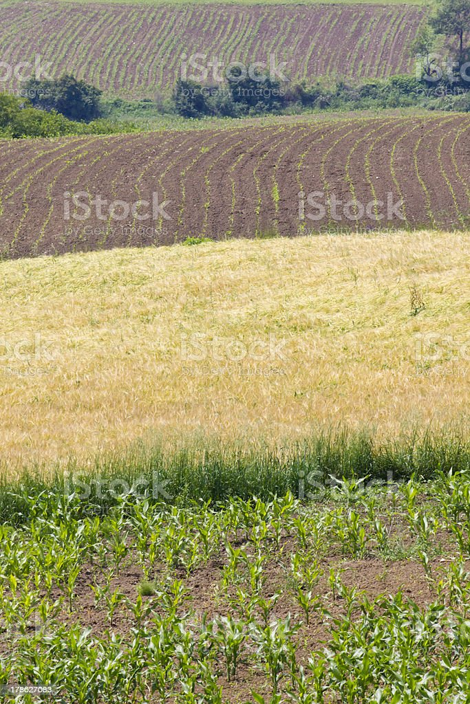 agriculture fields royalty-free stock photo