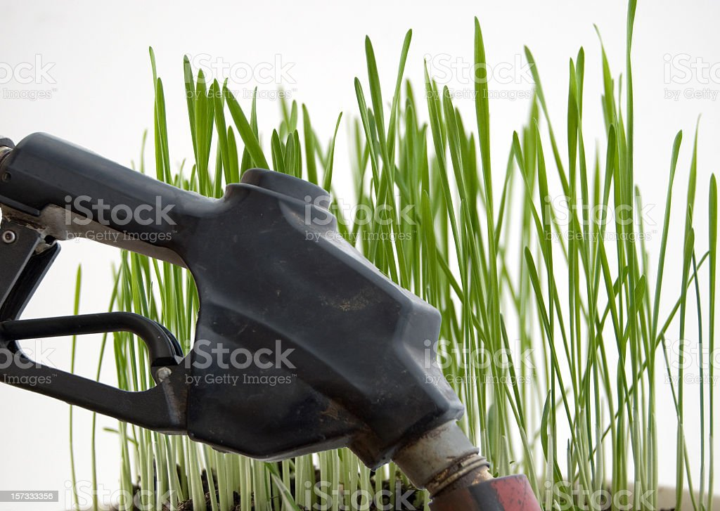 Agriculture... Food or Fuel? royalty-free stock photo