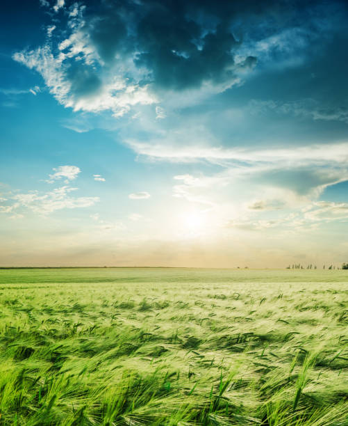 agriculture green field in spring and sunset in low clouds stock photo