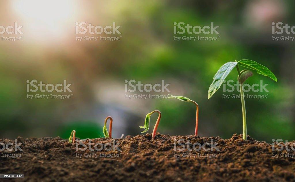 landwirtschaft. Wachsende Pflanzen. Pflanzensäedling. Boden mit natürlichem grünen Hintergrund und Sonnenlicht - Lizenzfrei Baum Stock-Foto