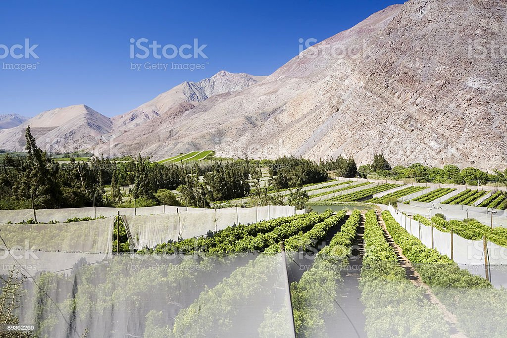 Agriculture in Chile royalty-free stock photo