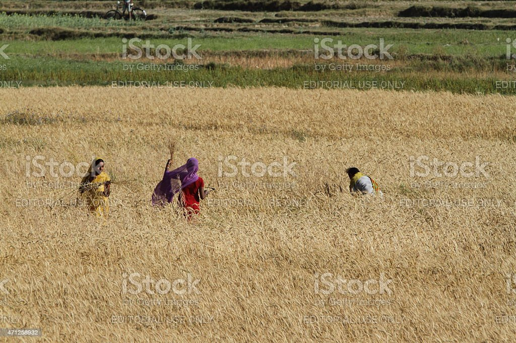 Agriculture in Nepal stock photo
