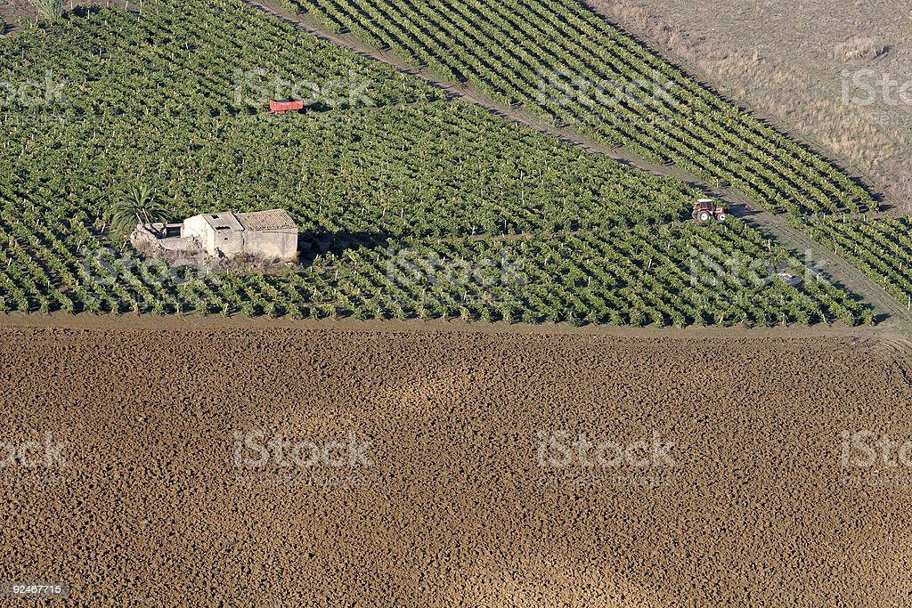 Agriculture in Sicily royalty-free stock photo