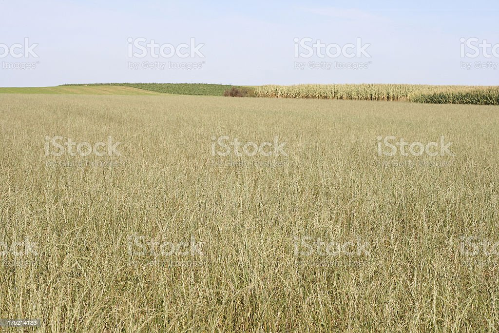 Agriculture in Wallonia Belgium royalty-free stock photo