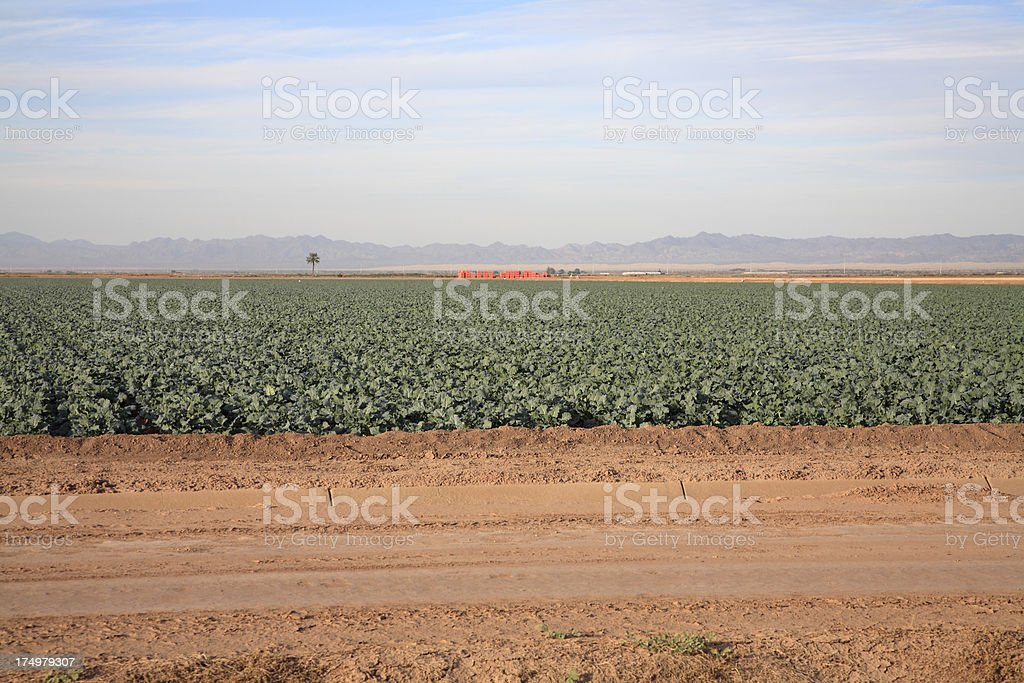 Agriculture Industry In The Imperial Valley California royalty-free stock photo