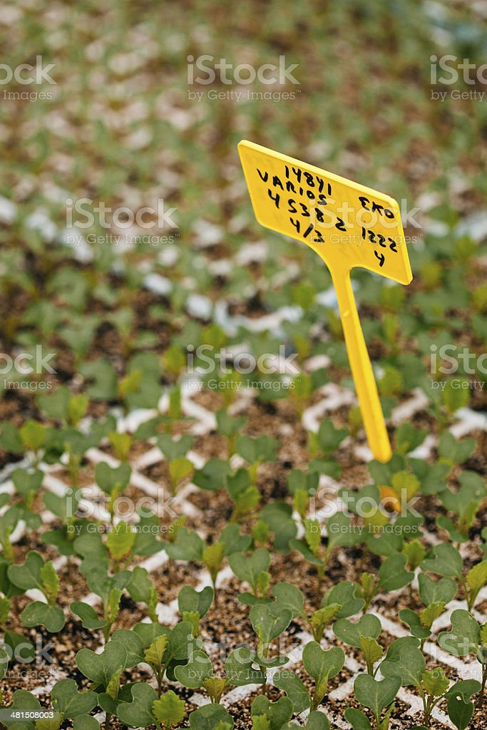 Agriculture industry - Seedbed royalty-free stock photo