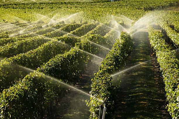 Agriculture Irrigation Sprinkler Okanagan Vineyard stock photo