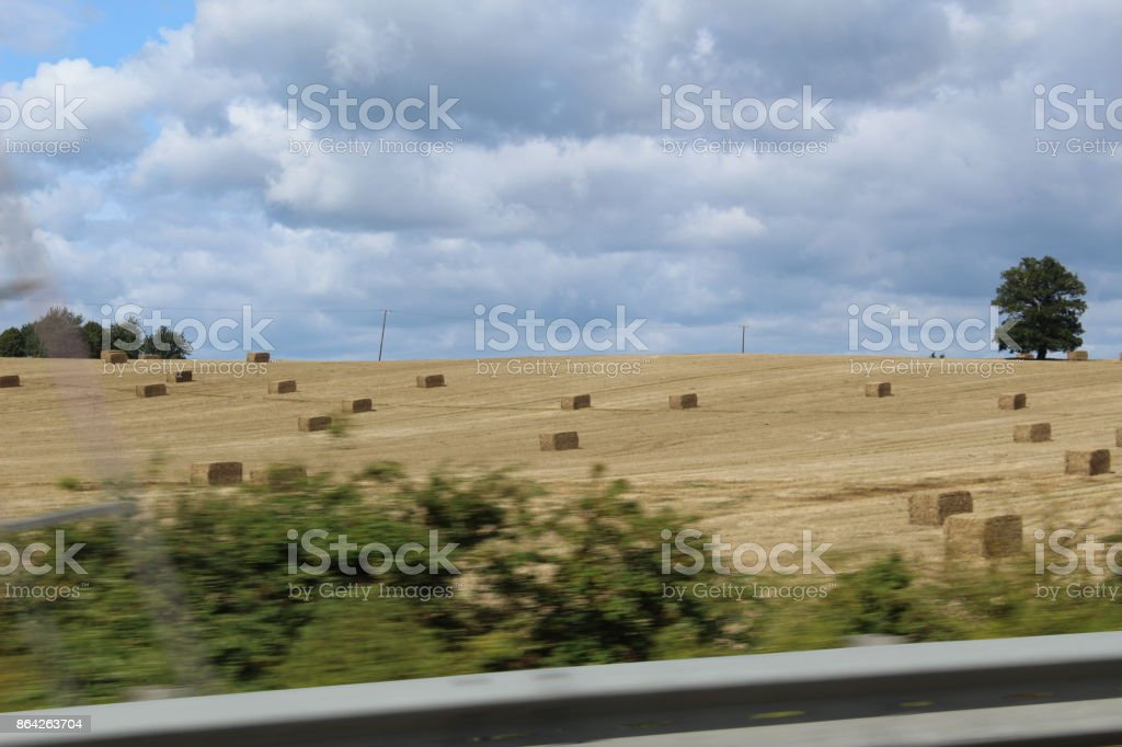 Agriculture Landscape royalty-free stock photo