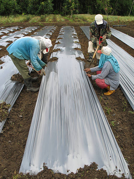 agriculture Farmers preparing a field for cultivation. migrant worker stock pictures, royalty-free photos & images
