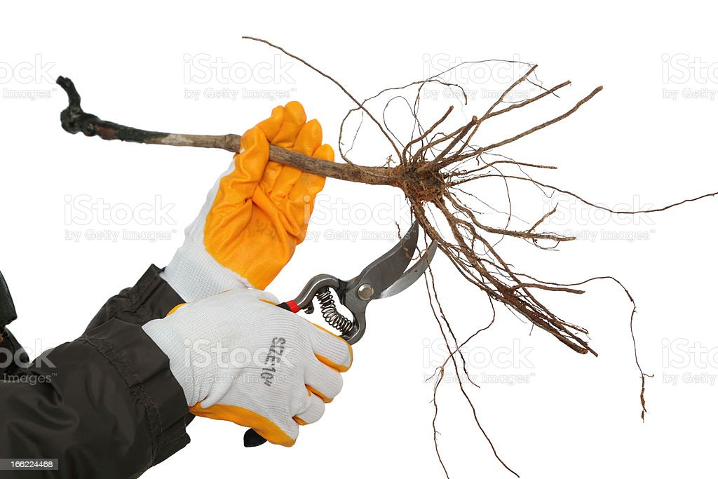 Agriculture stock photo