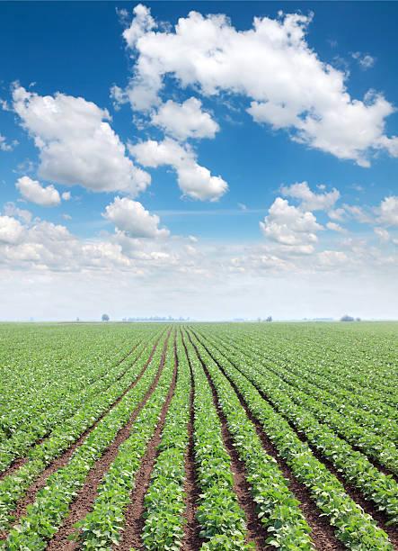 Die Landwirtschaft – Foto