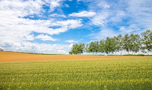 農産物 - 北海道 ストックフォトと画像