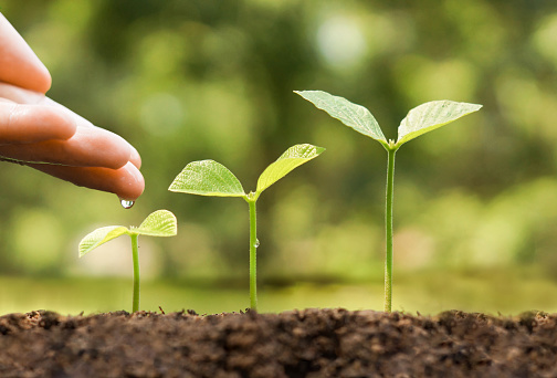 912882270 istock photo agriculture 508701498